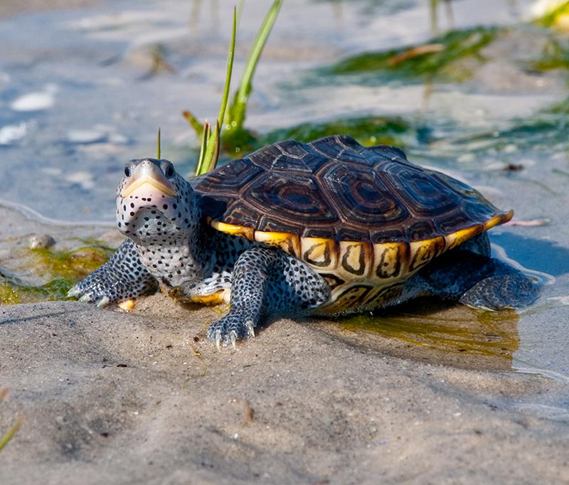 親愛的烏龜先生 − 烏龜/澤龜的飼養方法